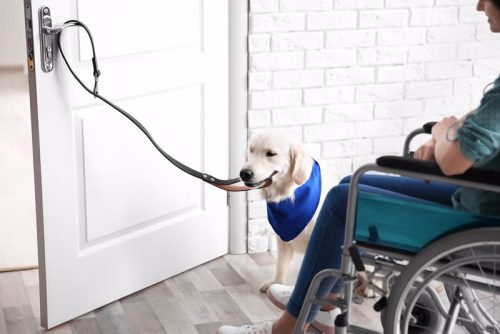 Could A Service Dog Help You Paws For Leos And First Responders
